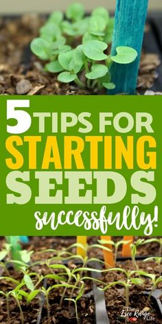Starting seeds indoors is a great way to get a lot of plants for your vegetable garden. Here are 5 tips to make seed starting indoors successful- including tips on lights, watering, soil, and more