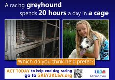 Saving Greys: Adoption outreach proposal advances despite opposition from racing industry profiteers     http://blog.grey2kusa.org/2012/04/proposal-to-promote-greyhound-adoption.html