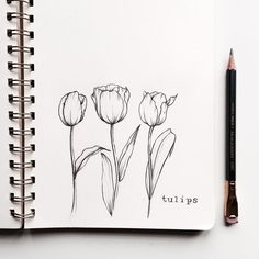 Finally got these tulips done! And my pencil keeps on getting shorter and shorter as this challenge goes on ?… Finally got these tulips done! And my pencil keeps on getting shorter and shorter as this challenge goes on ? Tulip Drawing, Plant Drawing, Drawing Flowers, Flower Drawings, Drawing Drawing, Garden Drawing, Drawing Ideas, Pencil Drawing Tutorials, Pencil Drawings