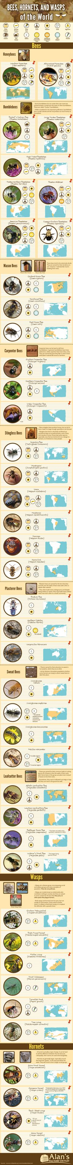 Tell the difference between a wasp and a bee (and a really problematic hornet) next time you go out.