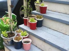 Upcycled Yogurt, Cottage Cheese, and Juice containers to little garden planters. - HOME SWEET HOME