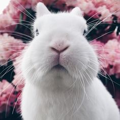 This sweet face is the reason why I choose cruelty-free! Feather Brows, Ivy House, Beautiful Babies, Cruelty Free, I Am Awesome, Bunny, Instagram Posts, Vegan Lifestyle, Rabbits