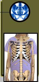 Skeletal System Facts