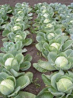 Комментарии к теме Garden Yard Ideas, Garden Landscaping, Fruit Garden, Vegetable Garden, Garden Planner, Farms Living, Small Farm, Farm Gardens, Agriculture
