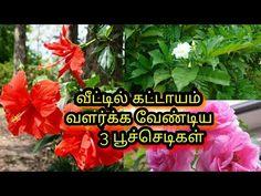 Dream Homes, Vegetable Garden, Gardening Tips, House Plants, Make It Yourself, Money, Youtube, Diy, Home Plants