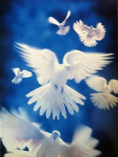 Postcrossing NL-450912 - Peaceful white doves in a blue sky. Sent by a Postcrosser in the Netherlands.