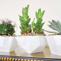 Looking for a unique (but cheap!) gift idea? Plant a trio of succulents in geometric dip bowls. Makes a great gift for anyone on your list!