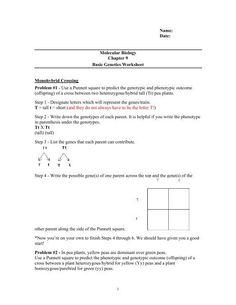 Genetics Problems Worksheet Answers 50 Genetics Problems ...