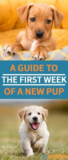 Golden Retriever, Retriever Puppy, First Night With Puppy, Puppys First Night Home, Puppy Schedule, Puppy Crate Training Schedule, Cockapoo Puppies, Cavapoo, Islands