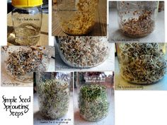 sprouting how-to