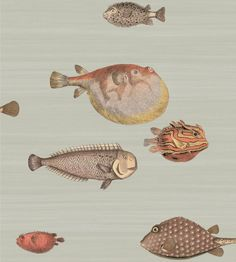 wallpaper Acquario (97-10030) | Cole & Son