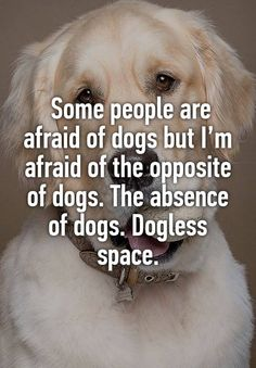 Some people are afraid of dogs but I'm afraid of the opposite of dogs. The absence of dogs. Dogless space.
