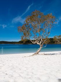 Lake McKenzie on Fraser Island  |  Hervey Bay, Queensland, Australia (Oceania)