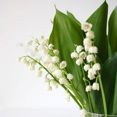 """lilies of the valley"" by pilli pilli on Flickr - Oh, how I love lily of the valley!"