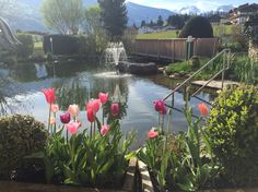 Frühlingsgefühle Plants, Garden, Garten, Planters, Gardening, Outdoor, Home Landscaping, Plant, Tuin