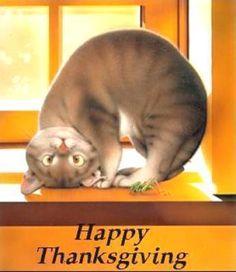 Thanksgiving Kitty Cute Cats I Love Dog Cat Illustrations