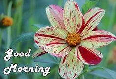 #goodmorning #MondayMorning #mondaymotivation #happymonday #mondaywisdom #mondaythoughts #GoodMorningWorld
