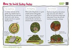 Activity sheets for outdoors & nature