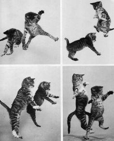 Danses de chats
