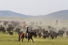 Big game conservation techniques developed in Wyoming preceded national policy shifts that now see national opposition. Grand Teton National Park, Yellowstone National Park, Cheyenne Frontier Days, Red Bluff, Wyoming State, Horse Illustration, Free Horses, Old Fort, Horse Ranch