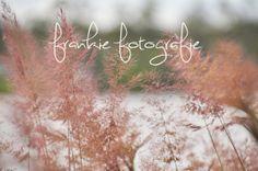 #Pink Grass #SeaGrass #Photo #etsy #print by FrankieFotografie on, $25.00