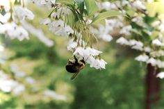 //Bumble-Bee//