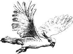 Native birds wallpaper by Native Swinson