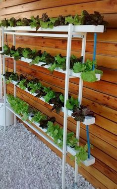 Cool Hydroponic Gardening For Beginners - Cool Hydroponic Gardening For Beginners If you are looking for Hydroponic gardening for beginners you've come to the right place. We have collect images about Hydroponic gardening for beginn… viralandtrend. Hydroponic Farming, Hydroponic Growing, Hydroponics System, Aquaponics Diy, Aquaponics Greenhouse, Indoor Vegetable Gardening, Organic Gardening, Container Gardening, Urban Gardening