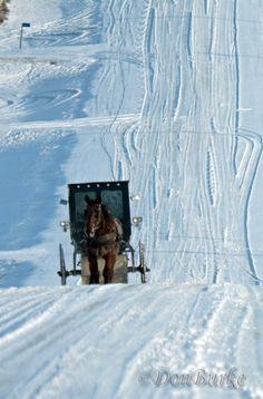 amish-iowa-buggy-long-shot Kalona,Iowa