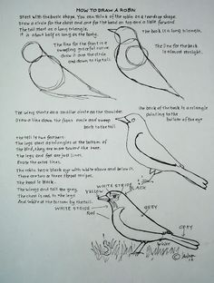 Here is a drawing worksheet to help young artist gin confidence. Give it a try to relax today. http://drawinglessonsfortheyoungartist.blogspot.com/2012/04/how-to-draw-robin-bird-drawing.html