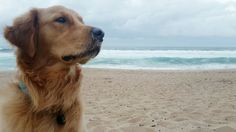 King of the beach 🐶👑🌊