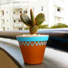 Cacto em vaso decorado