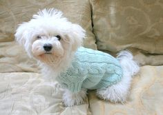 Small Dog Clothes Hand Knit Button Dog Sweater Pet by BubaDog