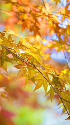 Leaves, Tree, Autumn, Branch | Automne | Télécharger le fond d'écran 1080x1920. Téléphones Mobiles, Apple iPhone 6 Plus :: WallpapersFund.com