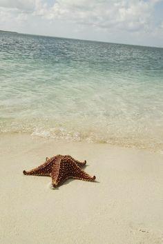 Starfish Beach, Cayman Islands -