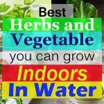 9 Best Herbs and Vegetable You Can Grow Indoors in Water