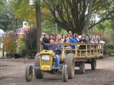 Hayrides Down A Decorated Path Hicks Nurseries