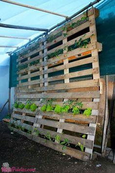 jardim vertical com pallets (4)
