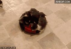 Roomba kitten adventure