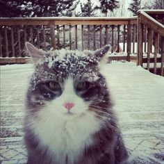 Did someone forget to let me in last night?!?  Guess what?  It snowed.