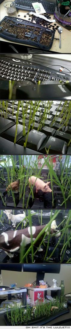 Planting a garden in a keyboard. Best office prank idea! need to do this for April 1