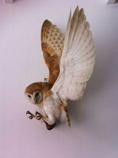Taxidermy Barn Owl , Bird of prey . Taxidermy Decor, Bird Taxidermy, Lechuza Tattoo, Owls For Sale, Photo Animaliere, Bird Wings, Owl Bird, Pet Birds, World Of Interiors