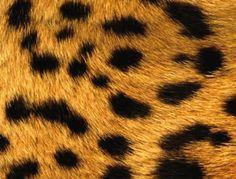 Leopard II - Blackberry 8300 Blackberry Bold, Iphone 4, Iphone Wallpaper, Wallpapers, Backgrounds, Art, Templates, Art Background, Kunst