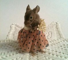 Little Lady Taxidermy Mouse. $115.00, via Etsy.... I want!