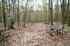 Awenda Provincial Park Ontario Canada Ontario Parks, Canada, Plants, Plant, Planets