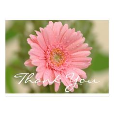 Floral Thank You Pink Gerbera Daisy Flower Postcard | Zazzle.com Pink Gerbera, Pink Daisy, Pink Flowers, Thank You Quotes, Thank You Postcards, Postcard Size, Happy Day, Green Leaves, Create