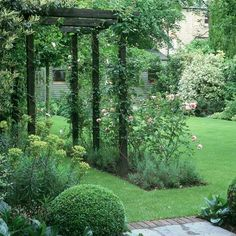 Back yard idea - boxwood, dark wood arbor, lawn and beds