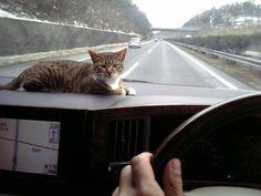 I'm a Navigator