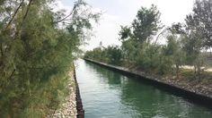 Riprogettazione degli Spazi Aperti dell'isola di Sacca Sessola, Venezia