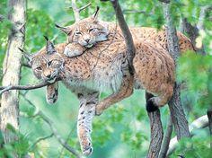 Tiere - Bing Bilder